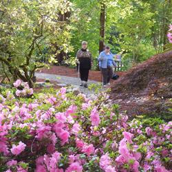Though April showers came our way this year--and WOULDN'T LEAVE--they did bring these gorgeous rhodies, blooming in May.