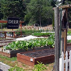 Any Lakewood gardener will appreciate the wry humor of the food bank garden's sign: